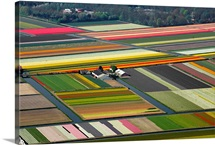 Tulips Fields, Lisse, Holland - Aerial Photograph