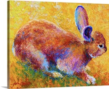 Cottontail I