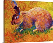 Cottontail II
