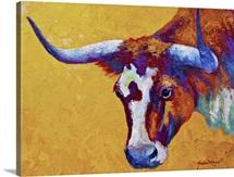 Longhorn Portrait