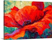 Red Poppy III