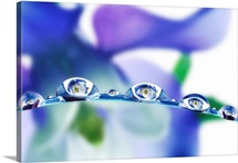 Water Drop Flowers