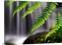 Cascading Ferns