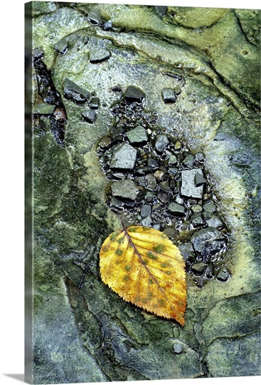 Golden Leaf in Emerald Stream