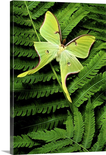 Green Moth on Ferns