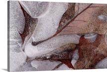 Oaks On Ice
