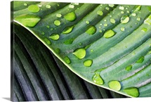 Palm Leaf after Rain