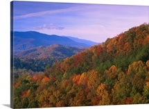 Appalachian Mountains ablaze with fall color, Great Smoky Mountains National Park