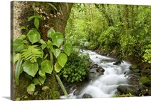 Creek flowing through rainforest, Costa Rica