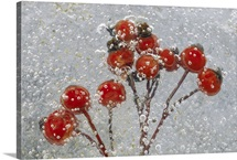 Detail of berries frozen in ice