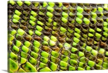 European Green Lizard Scales (Lacerta viridis)