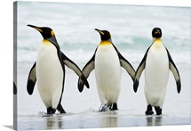 King Penguin trio on beach