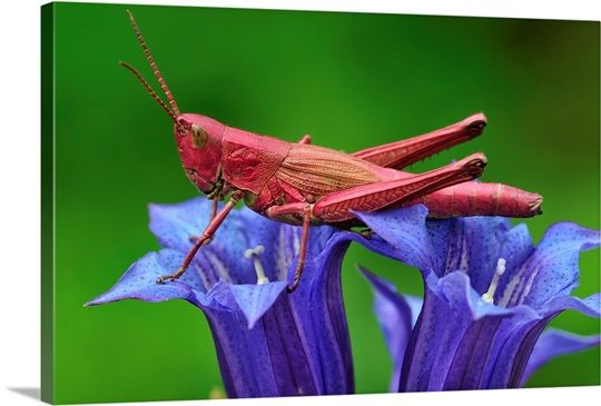 grasshopper switzerland