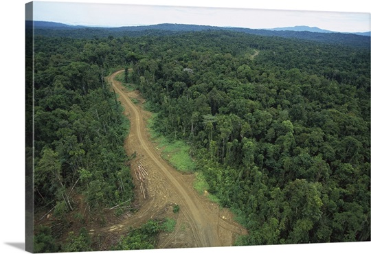 Logging road in lowland tropical rainforest, Aird River, Kikori Basin, Papua New Guinea