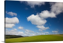 Pastures under blue sky with cumulus clouds, New Zealand