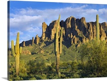 Saguaro cacti and Superstition Mountains at Lost Dutchman State Park, Arizona