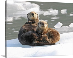 otter rock single women Shop otter bumper stickers from cafepress make a statement with tons unique designs or create your own custom bumper sticker with text and images high quality printing on durable, weather resistant vinyl.