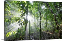 Sun shining in tropical rainforest, Barro Colorado Island, Panama