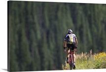 A bicyclist in a landscape of evergreen trees and wildflowers in bloom