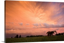 A blazing sunset with horses in a pasture