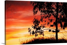 A bright red, orange and yellow sunset silhouettes a tree in Nipomo, California