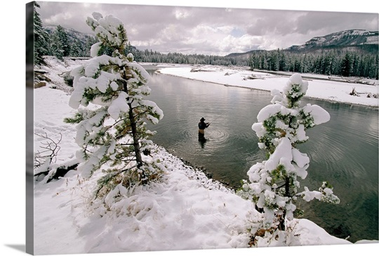 A fisherman in the Yellowstone River, Wyoming