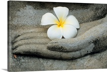 A frangipani flower rests on the hand of a Buddha statue at Wat Yai Chai Khon