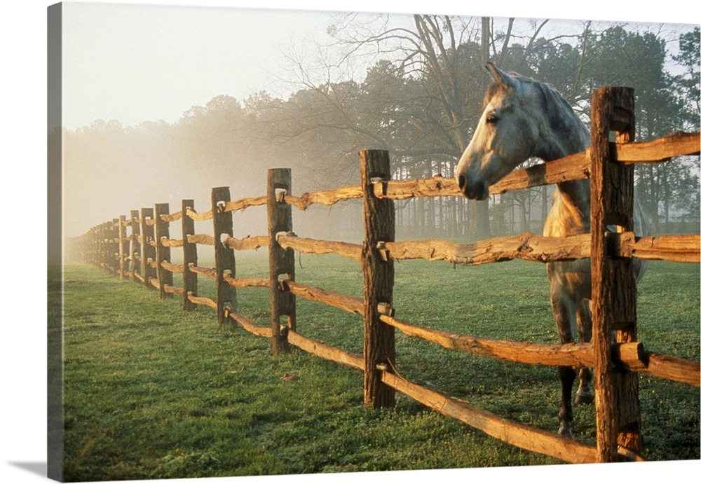 A horse watches the mist roll in over the fields