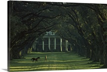 A man leads his horse at Oak Alley, an antebellum sugar plantation