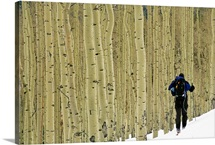 A man on skis touring an aspen glade in the snow