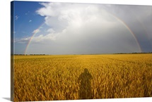 A man's shadow on a wheat field with a rainbow behind a passing storm