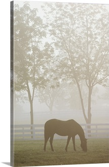 A misty scene at the Kentucky Horse Park