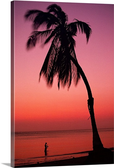 A palm on a Caribbean beach at sunset, Colombia