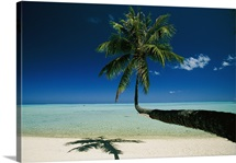 A single palm tree grows horizontally across the beach, Bora Bora, French Polynesia