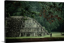 A spider monkey named Pancho, a resident of Copan, strolls past a small pyramid