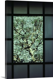 A tree in a courtyard is framed by a window, Hagi, Honshu Island, Japan