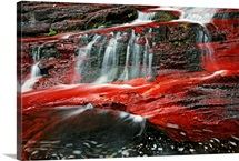 A Waterton creek bed gleams crimson from iron-rich rocks, Waterton Lakes National Park, Alberta, Canada