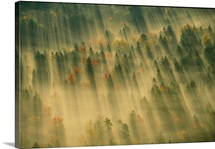 Aerial view of autumn hued forest with morning fog