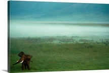 African elephant, Ngorongoro Crater, Great Rift Valley, Tanzania