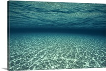 An underwater view of sunlight infiltrating the clear waters