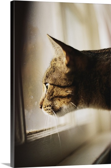 Asian print cat looking out window can
