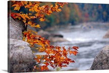 Autumn hues and large boulders along the Gauley River