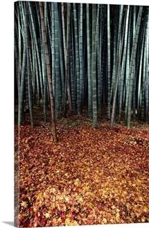Autumn leaves beneath bamboo shoots, Saihoji Temple, Japan