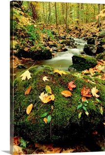 Autumn view shows fallen leaves on rocks next to a mountain stream