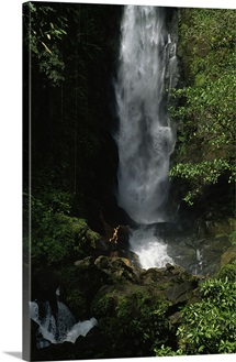 Bather leaps into pool below falls, Trafalgar Falls, Dominica Island, West Indies