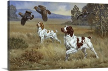 Brittany spaniels flush three birds from cover in a meadow.