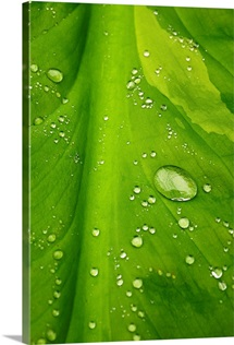 Close up detail of water droplets on a leaf