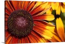 Close-up of an orange flower