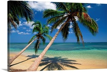 Coconut Palm trees and beach, Dominican Republic