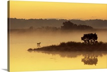 Early morning mist on Black Duck Pond with a sika deer, Chincoteague National Wildlife Refuge, Virginia